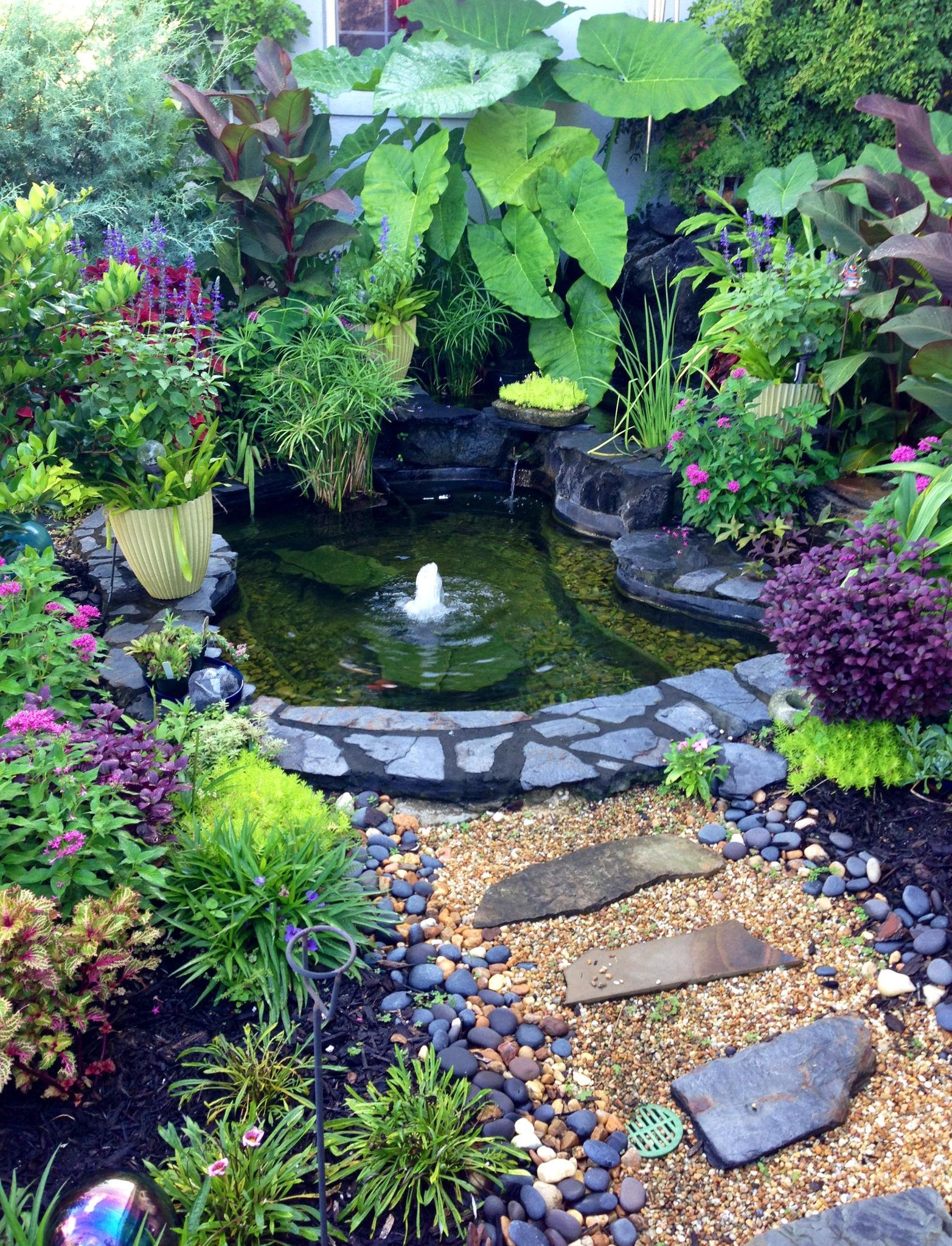 Beautiful outdoor water garden outdoors pinterest for Backyard pond plants and fish
