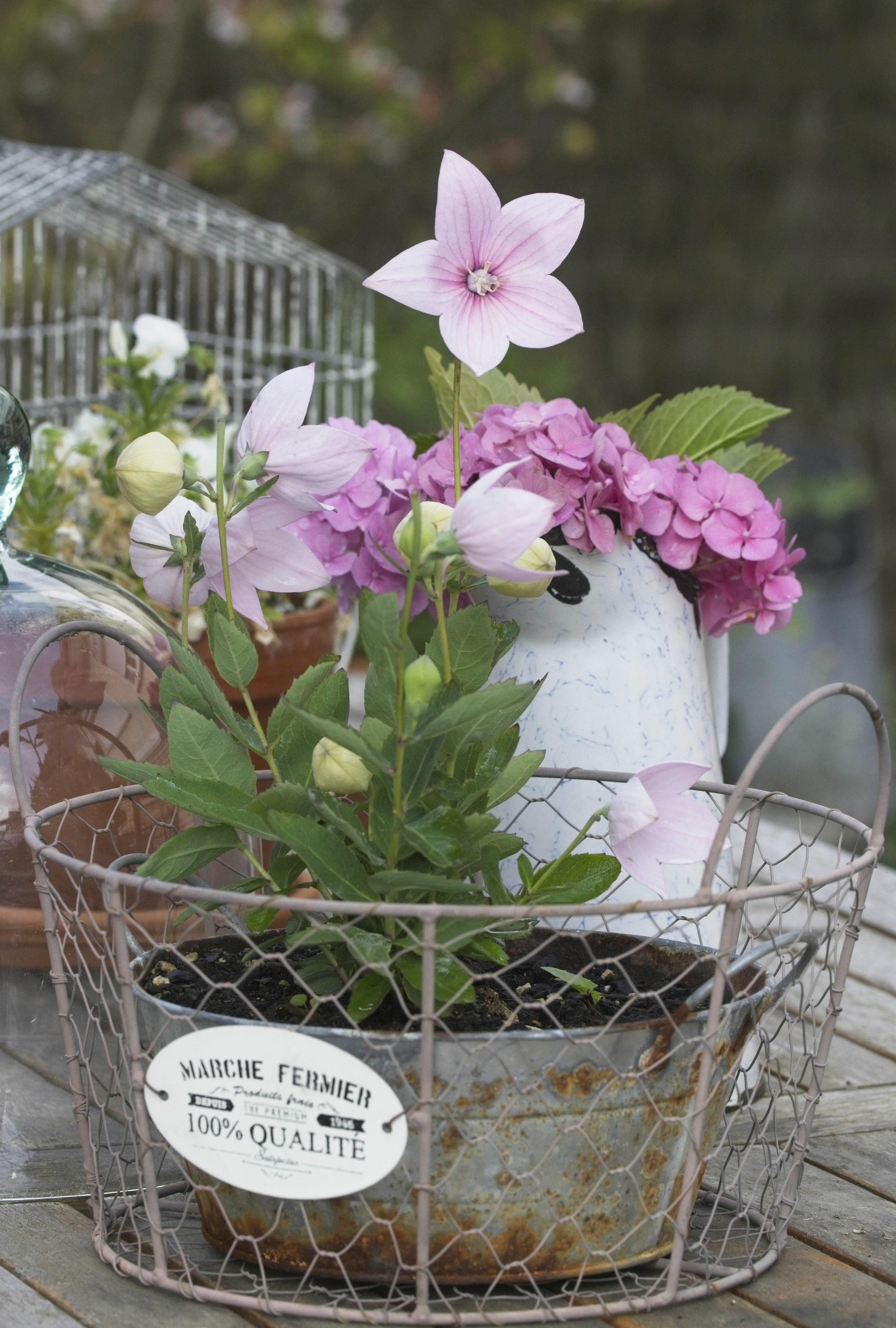 Comment embellir son jardin en hiver recyclez vos objets