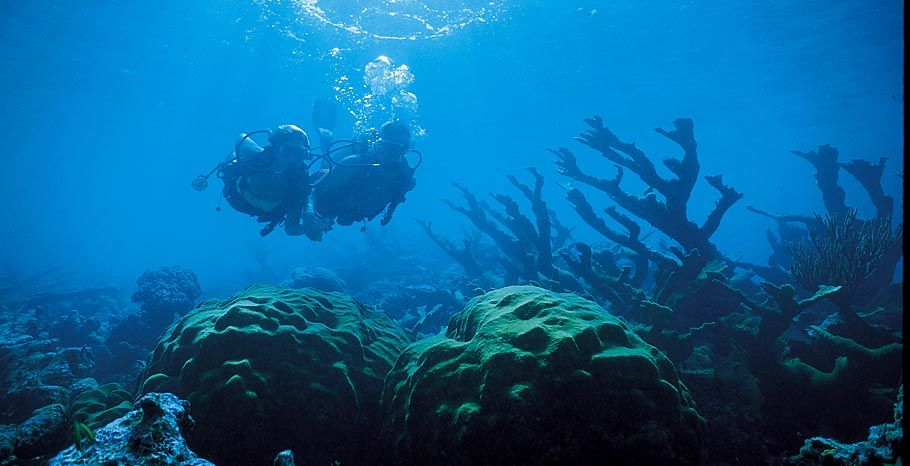 Turks And Caicos Scuba Diving Diving Underwater