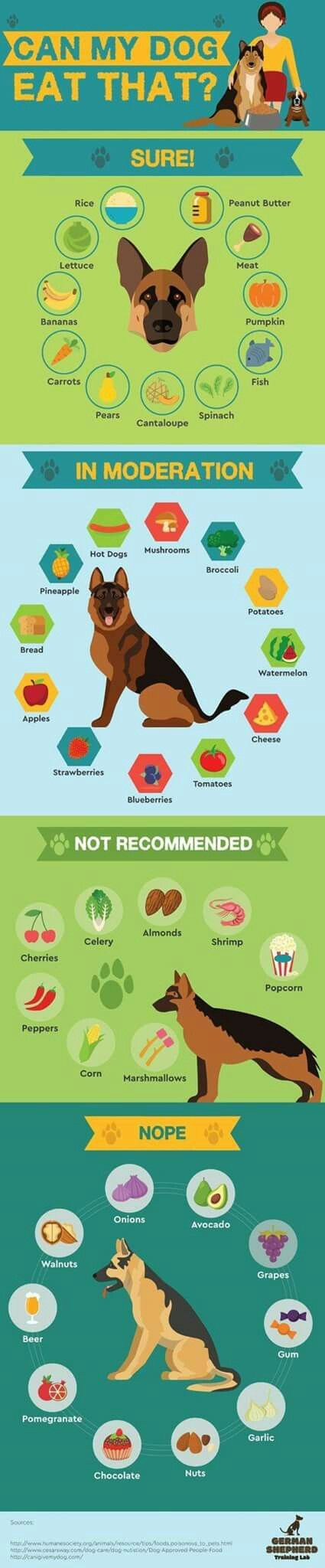 Pin By Maggie Singer On German Shepherds Dog Info Pets Dog Care