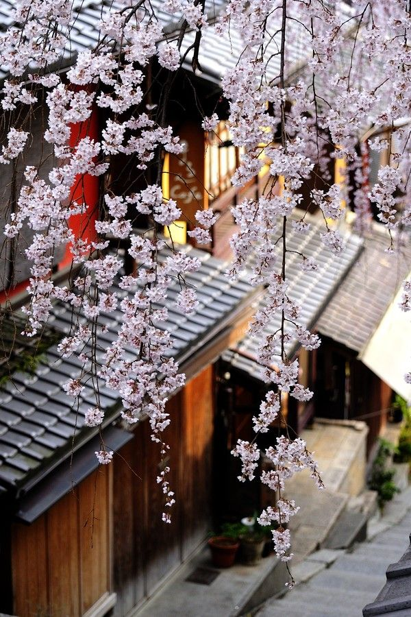 Spring in Kyoto, Japan | Yasuhiro Takagahara on 500px 三年坂