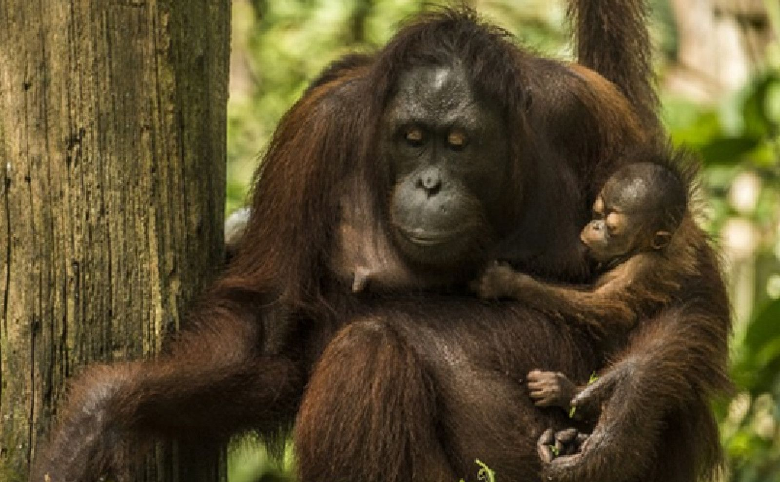 Stark Reminder of How Palm Oil Has Changed the Natural