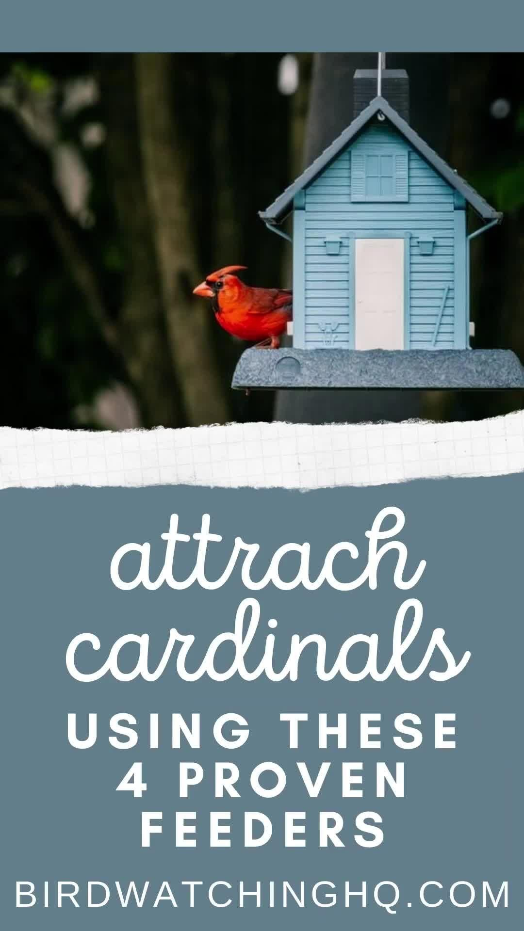 4 Simple Strategies To Attract Cardinals To Your Feeders 2018