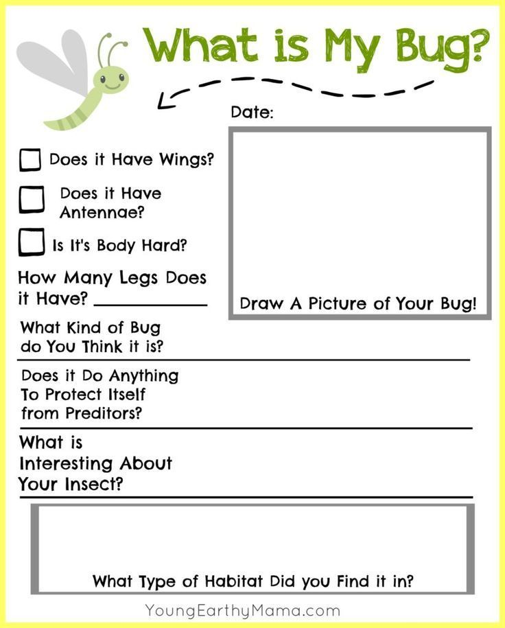 free insect identification printable for kids nature science science early learning have fun. Black Bedroom Furniture Sets. Home Design Ideas