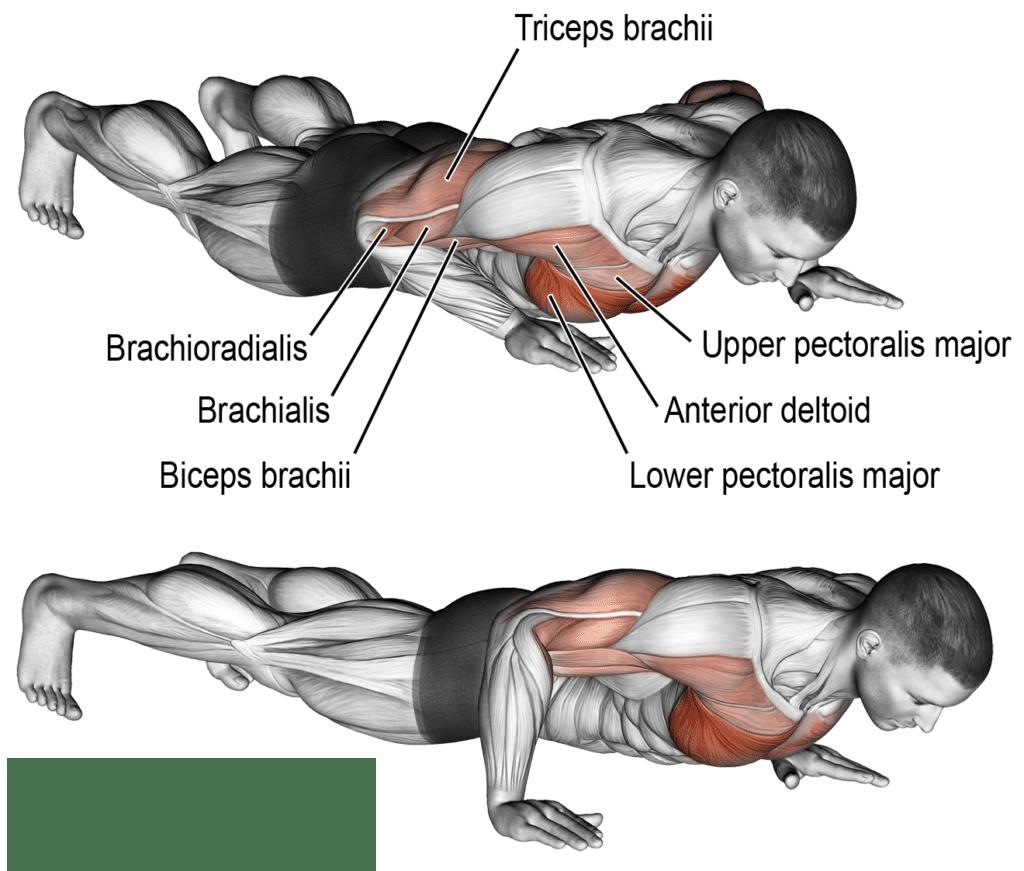 تمرين الضغط الميل الجانبي In 2020 Fitness Body Chest Workouts Weight Training