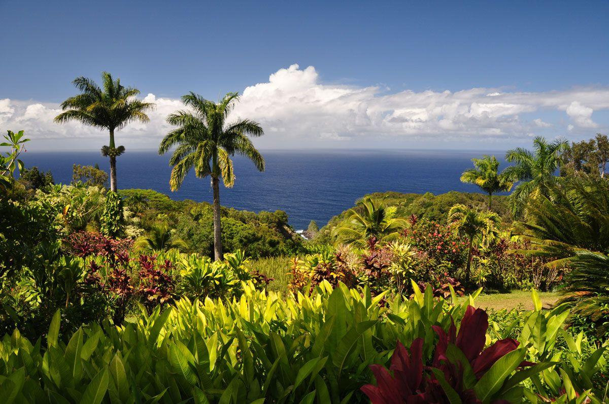 188ce4ae67e4fdec8a637ebb42df7d74 - Hana Maui Botanical Gardens Hana Hi