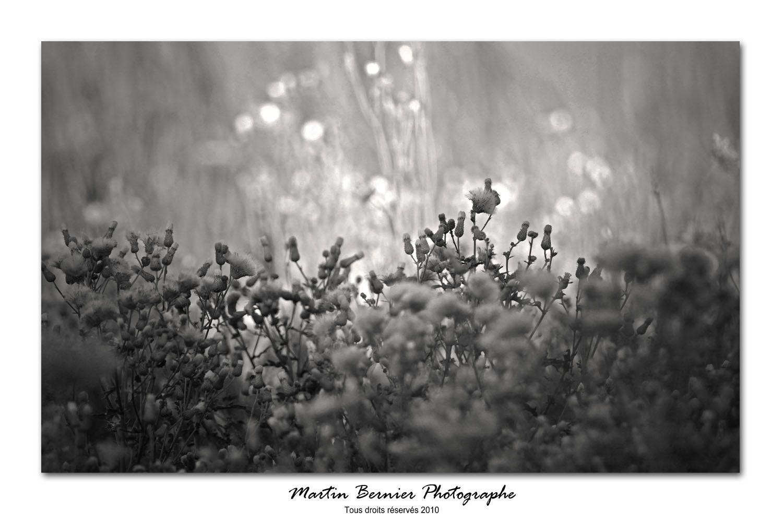 http://martinbernier.com    #photographe #professionnel #Montréal #cours #gratuit