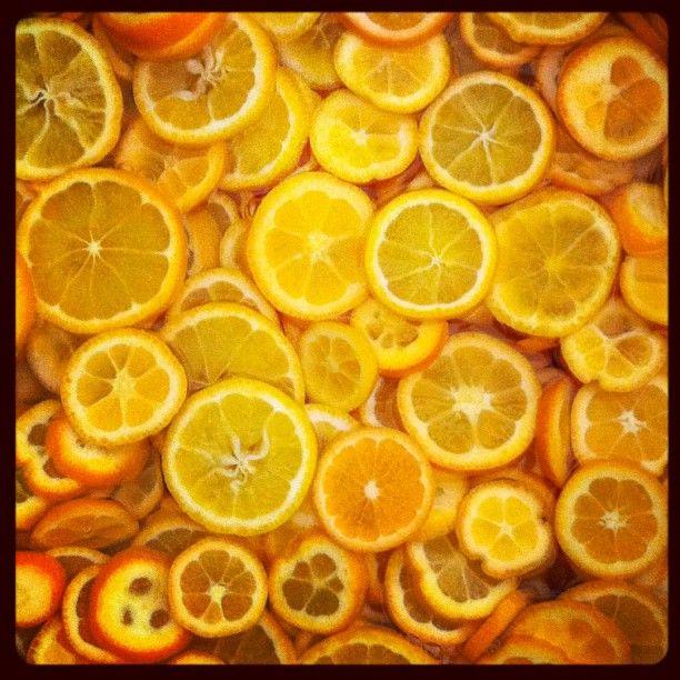 meyer lemons are the king of citrus fruits