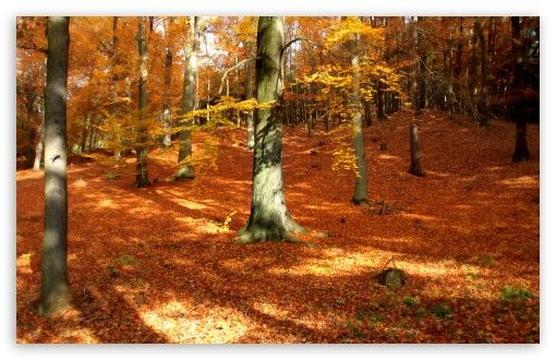 Download Autumn, Forest HD Wallpaper See
