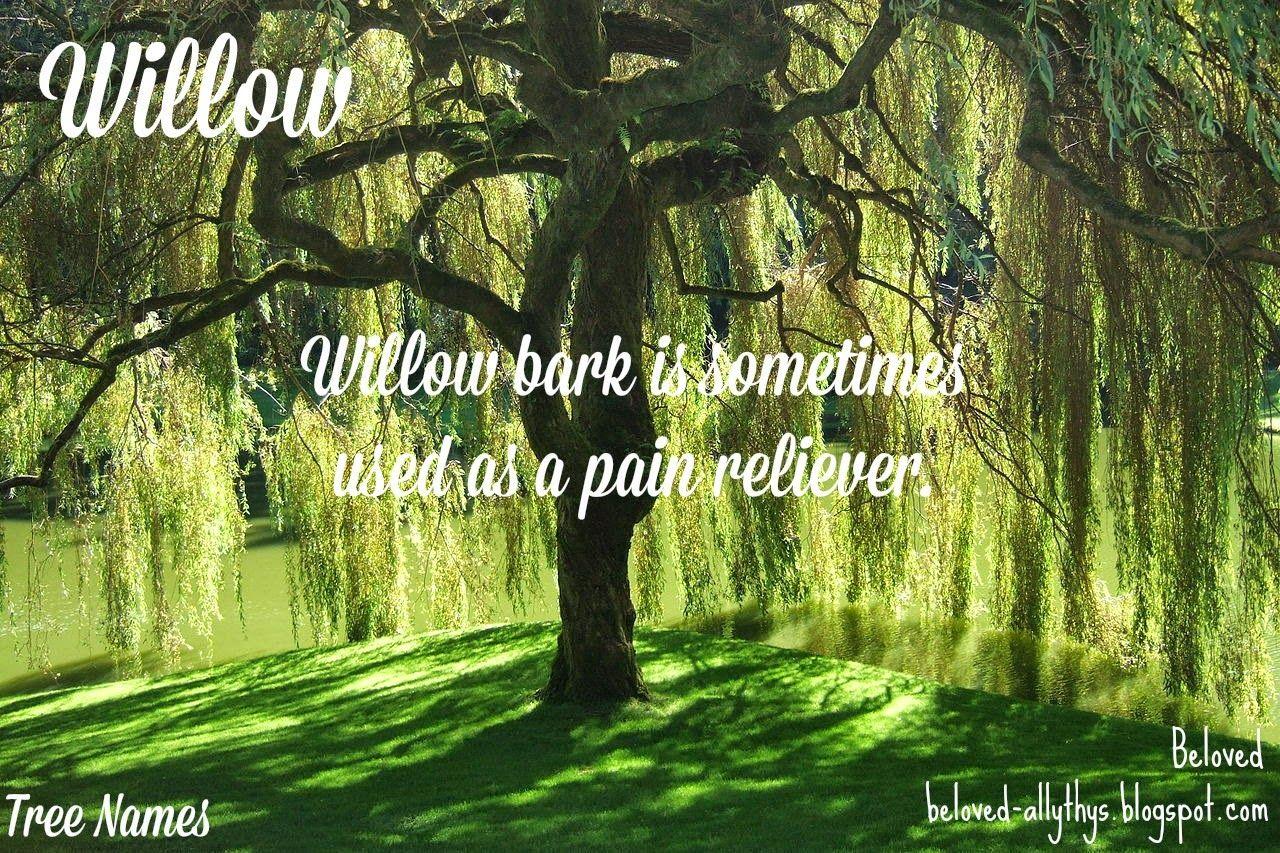 Tree Names: Willow | Nature names, Unisex name, Baby names