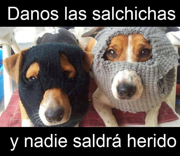 Danos Las Salchichas Y Nadie Saldra Herido Memes De Perros Chistosos Memes Animales Memes Perros