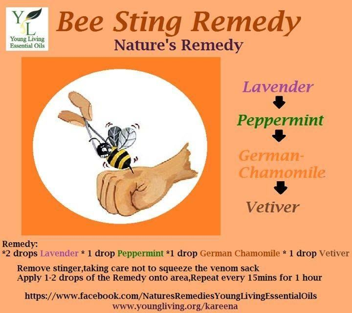 Bee Sting Remedy Remedies For Bee Stings Living Essentials Oils Essential Oils For Skin