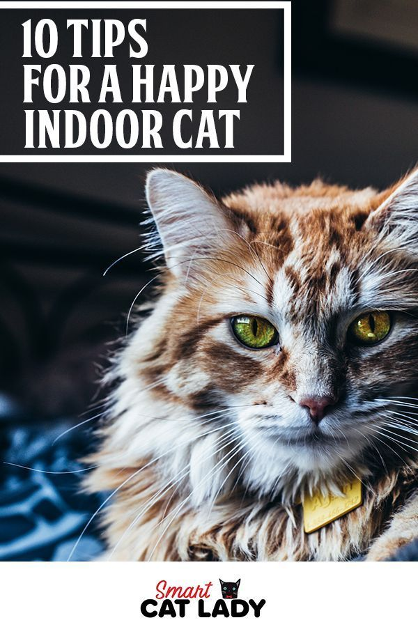 10 Tips For A Happy Indoor Cat Indoor Cat Cat Training Cat Care