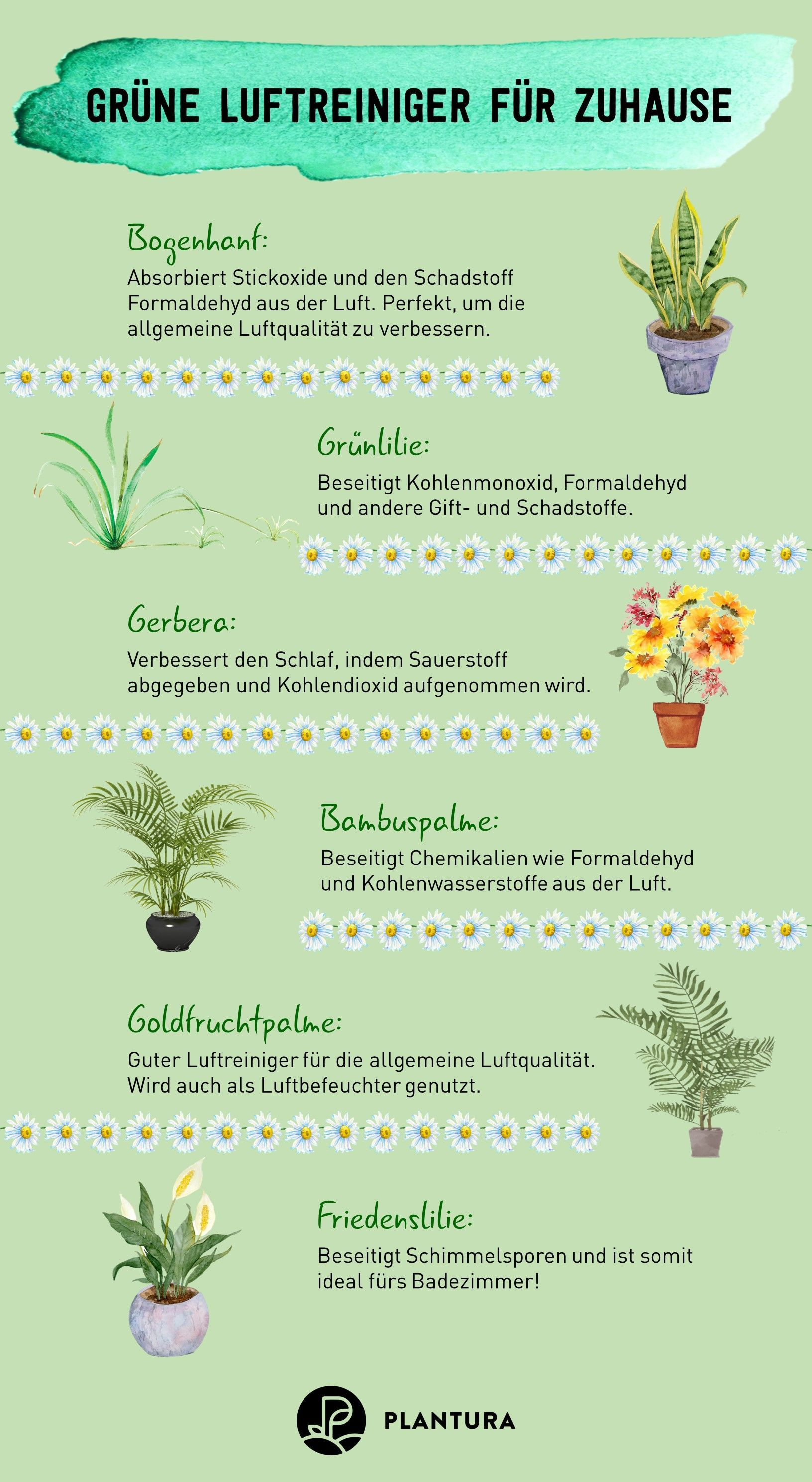 Luftreinigende Pflanzen: Die Top 10 – Plantura
