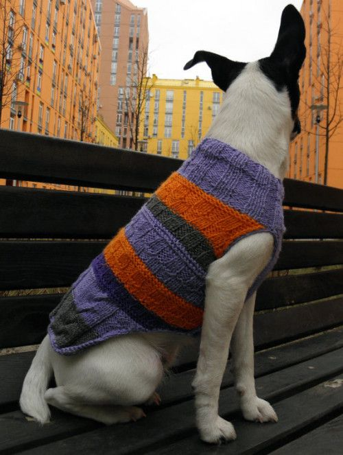 Dog Sweater, Orange Purple Stripes, Hand Knitted Dog Pullover. Bright