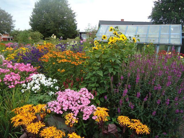 Explosions Of August Perennials Forum Gardenweb Perennials Garden Styles Plant Life