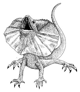 frill necked lizard drawing - Google Search | Aussie 12 days of xmas ...