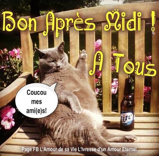 Bon après midi à tous! Coucou mes ami(e)s! #bonapresmidi chats pause soleil banc bon apres midi humour