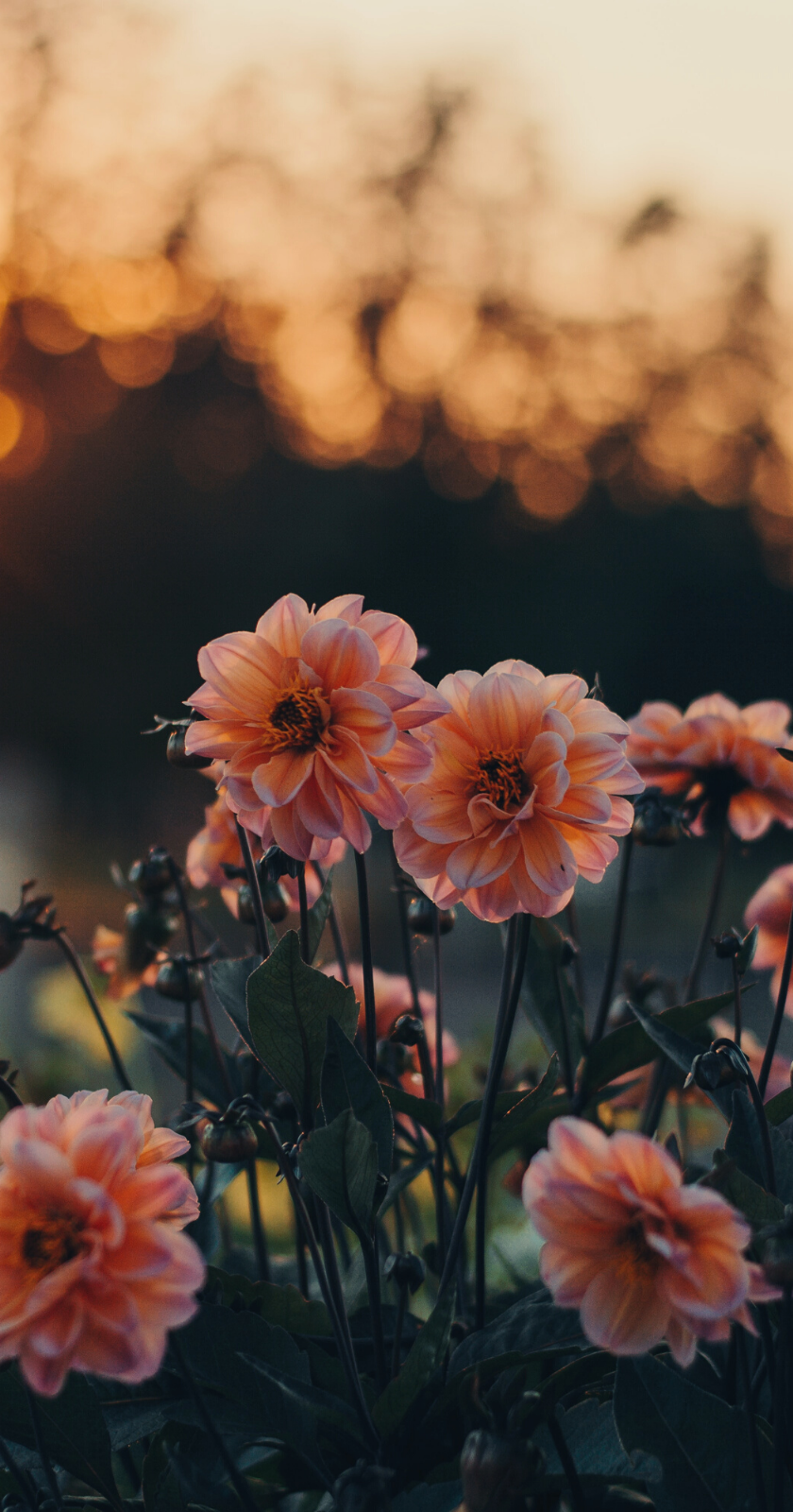 Wallpapers For Iphone 25 Best Floral Wallpapers From Tumblr In 2020 Flower Iphone Wallpaper Iphone Wallpaper Photography Wallpaper Nature Flowers