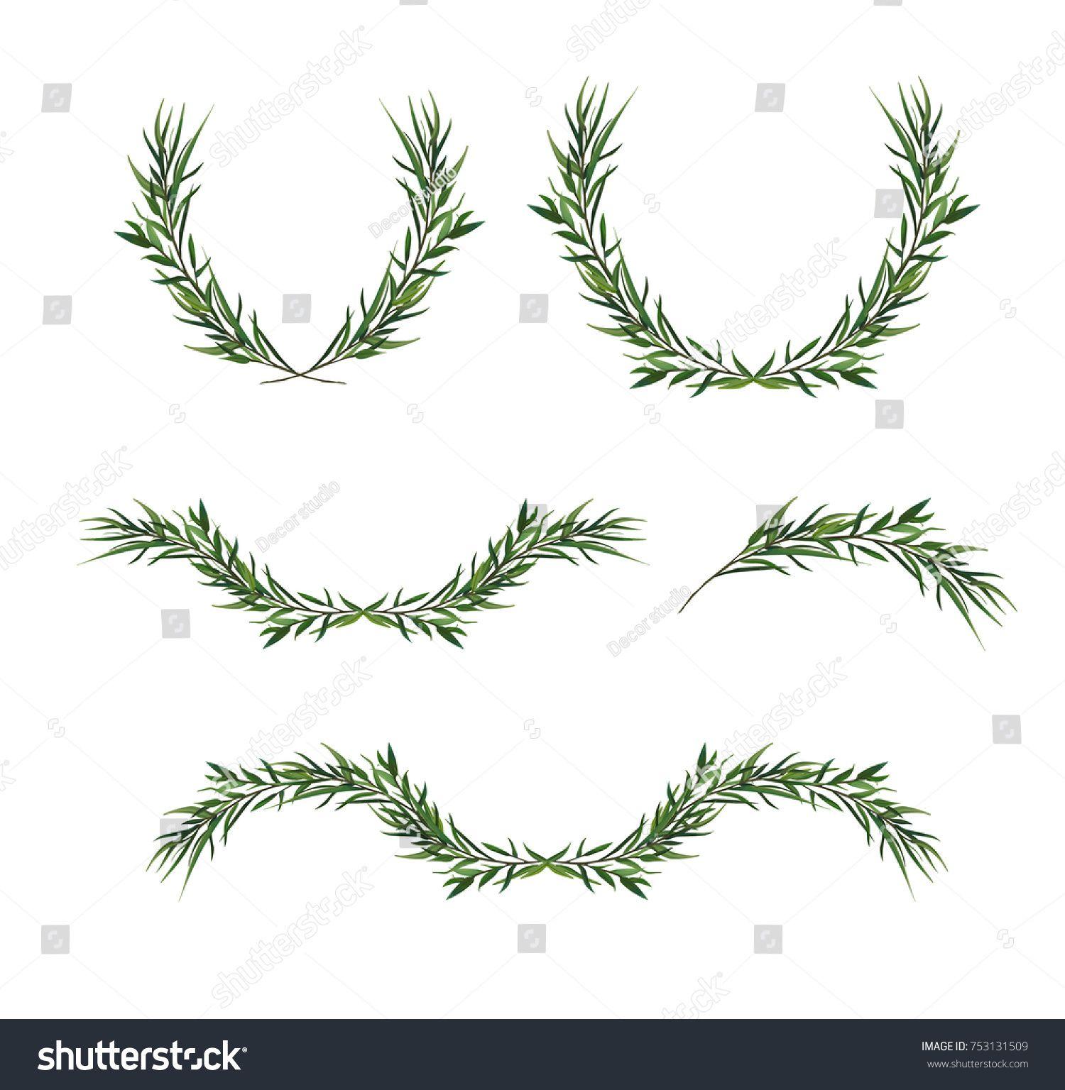 Christmas Greenery Vector.Vector Decorative Element Set Eucalyptus Round Green Leaf