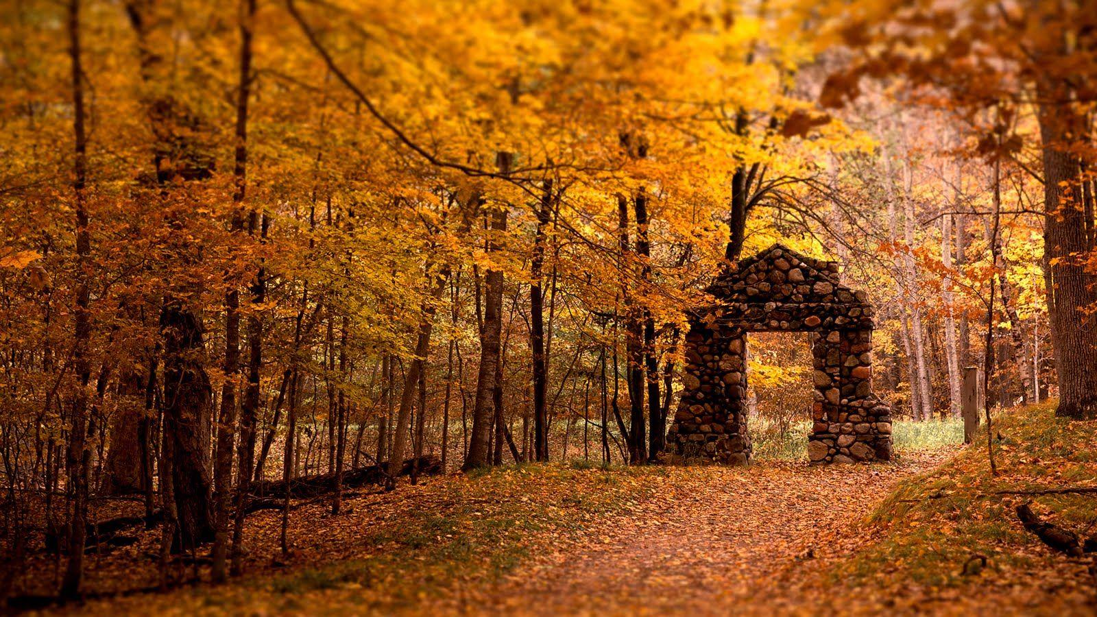 A Las Puertas Del Bosque Autumn Leaves Wallpaper Fall Wallpaper Fall Pictures