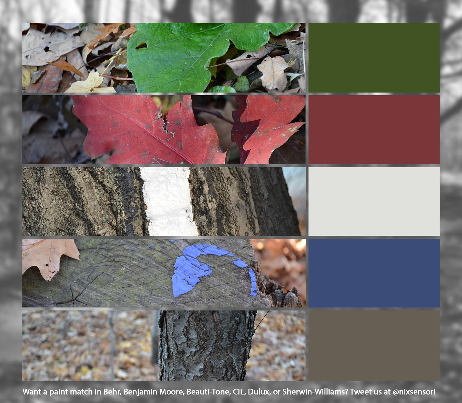 All of these colors were captured straight from nature with the Nix Pro Color Sensor. We'll provide paint matches in Beauti-Tone, Behr, Benjamin-Moore, CIL, Dulux, and Sherwin-Williams on request! #fall #palette #color