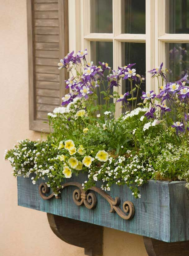 Plant Perennials In Containers Small Backyard Landscaping Backyard Landscaping Designs Container Gardening