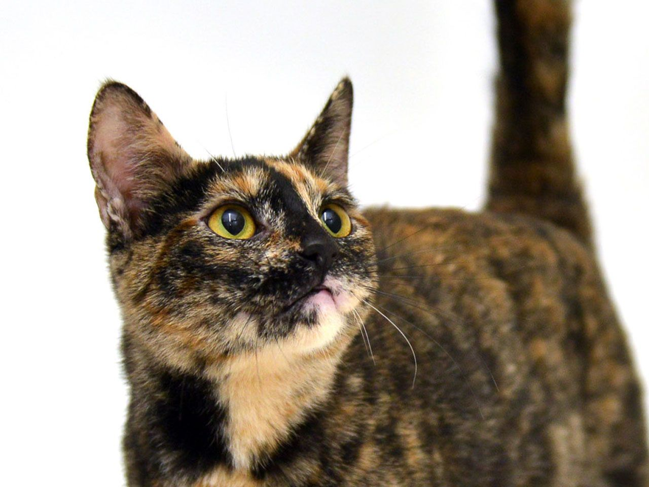 Sweet little Mabel will make her adopter very pleased