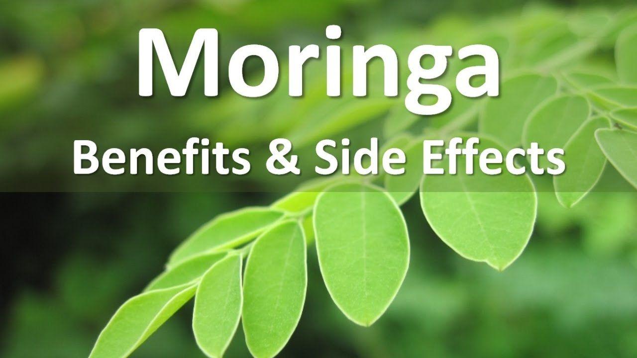 Moringa Oleifera Benefits And Side Effects Youtube Moringa Oleifera Benefits Moringa Moringa Oleifera