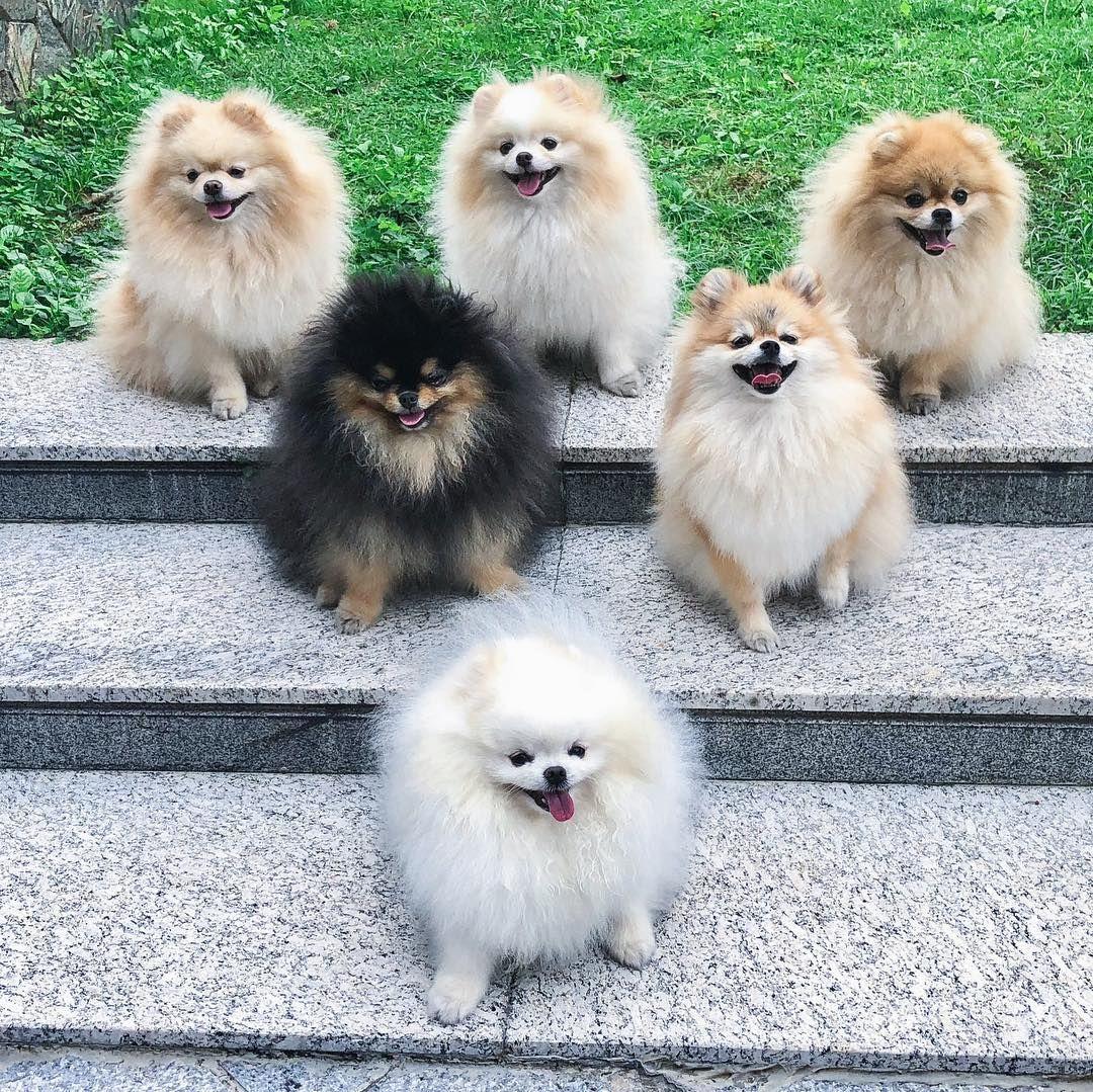 Umdiafrio Umbomlugarpracorrer Outono Squad Familytime Fofuradodia Cutefaces Boo Boo World S Cute Pomeranian Cute Dogs Beautiful Dogs