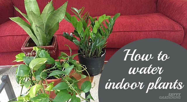 Types Of Houseplant Bugs Who They Are And What To Do About Them Plants House Plants Water Plants
