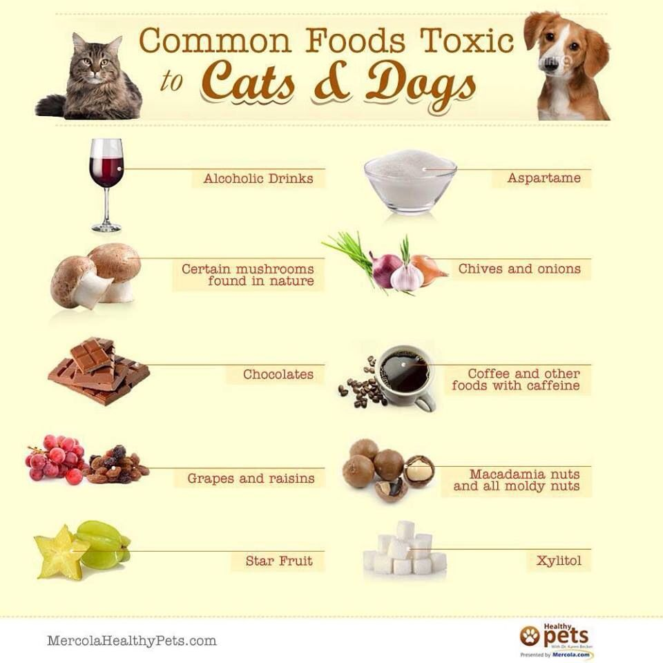 Cat And Dog Allergies I Can Attest To The Xylitol With An Emergency Vet Bill Of 600 When My Dog Ate A Foods Bad For Dogs Dangerous Foods For Dogs Pet Market