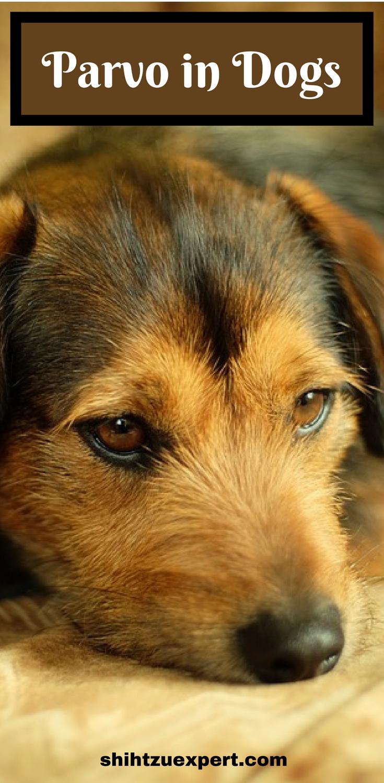 How To Treat Parvo In Dogs Dogs Puppy Training Parvo
