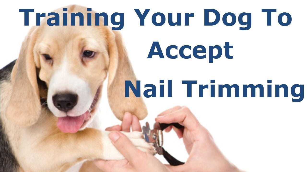 Teach your dog not to be aftraid of nail trimming in 2020