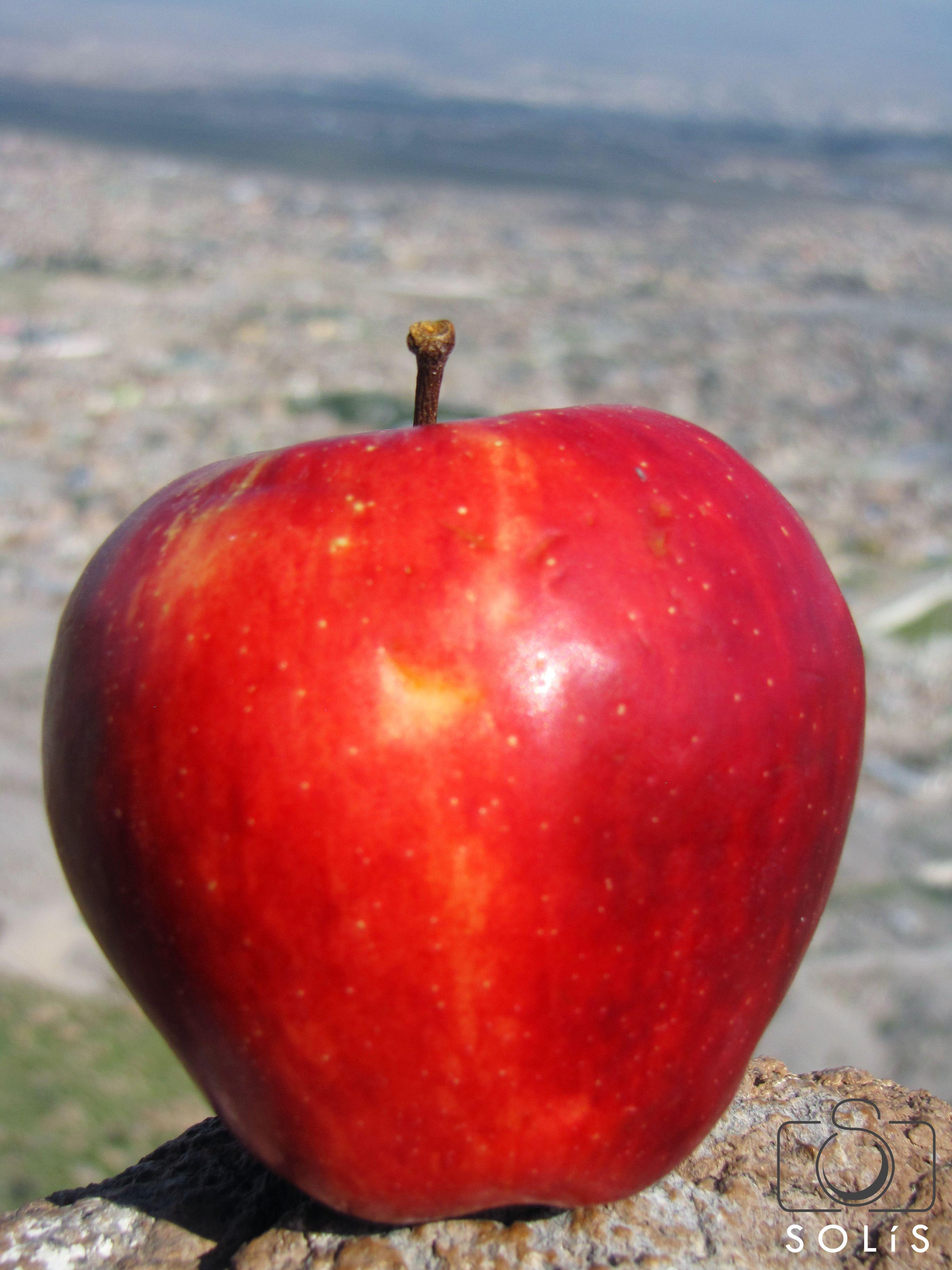 La manzana de Adán