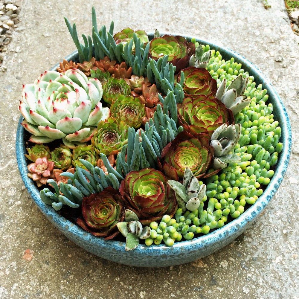 Santa barbara succulent art succulent dish gardens for Succulent dish garden designs