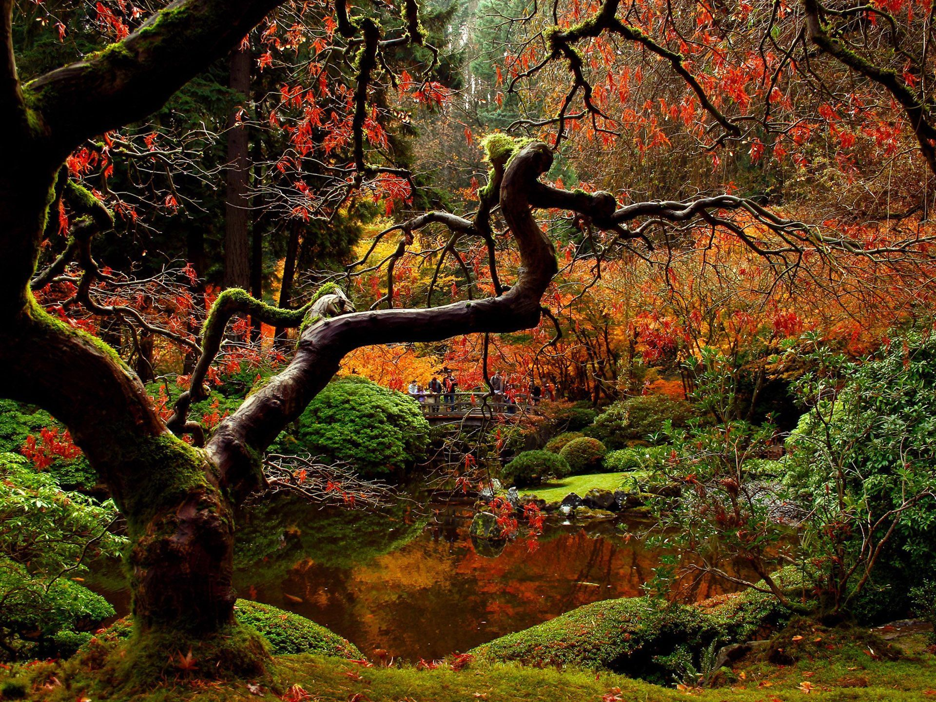 Breathtaking Fall Garden,wish I could be there right now ...