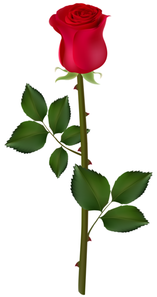 Red Rose Png Image Rose Flower Png Red Rose Png Beautiful Rose Flowers