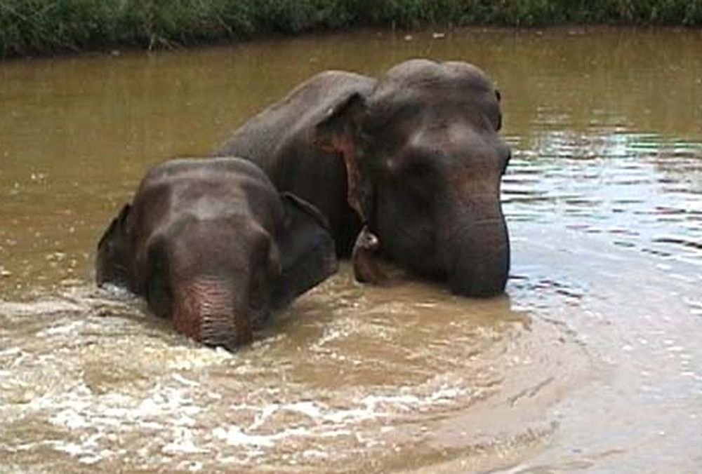 Watch Two Elephant Friends Reunite After 22 Years Video Circus Elephant Elephant Friends Reunited
