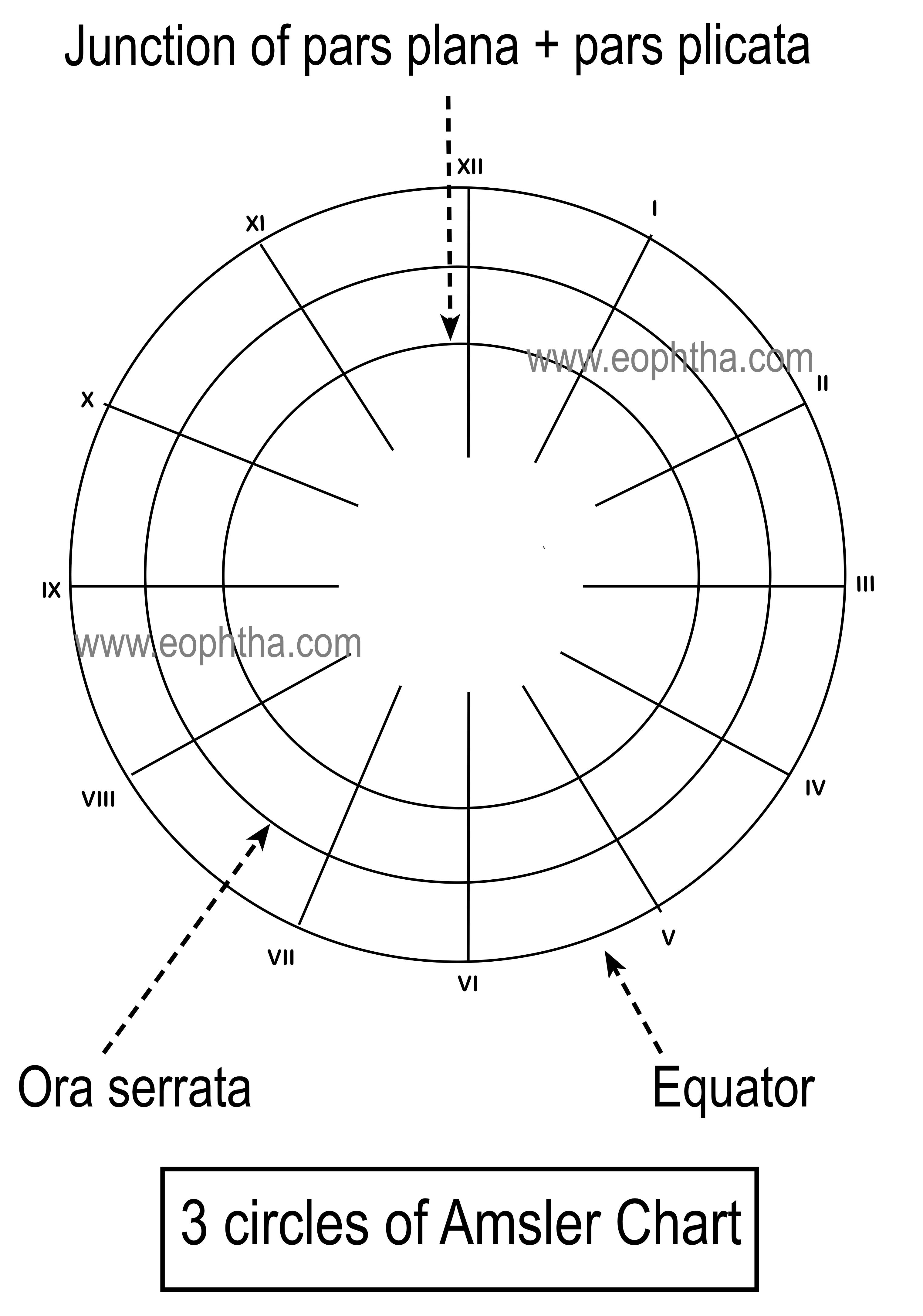 medium resolution of amsler chart