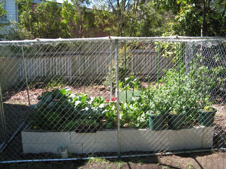 Possum Proof Fence Brisbane Local Food Patio Garden