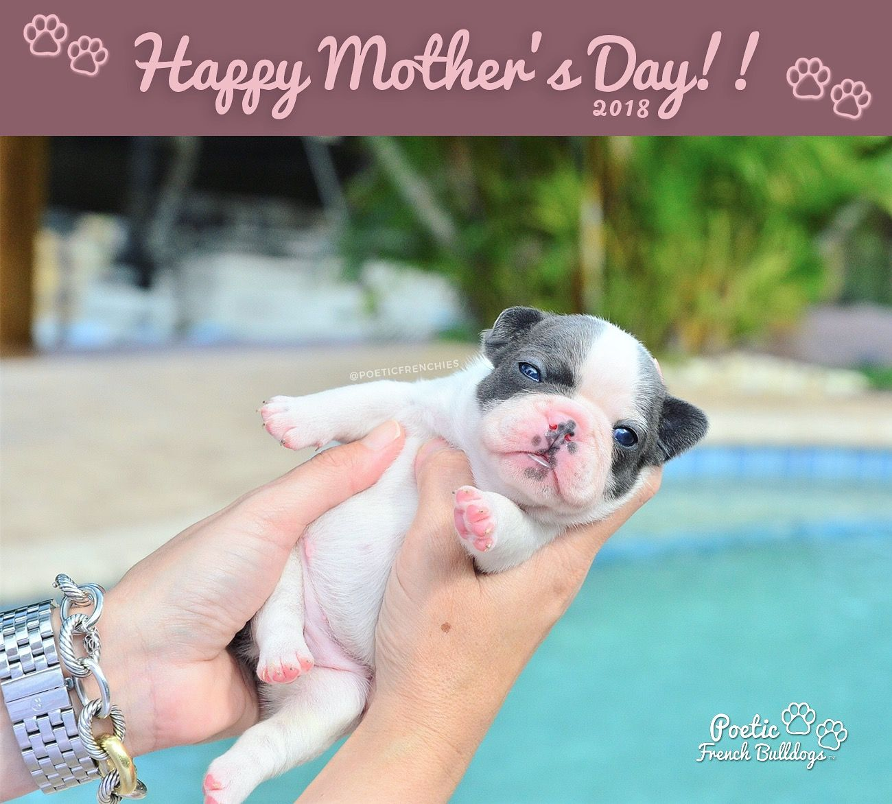 Happy Mother S Day With Love From Poetic French Bulldogs Happymothersday Frenchbulldog Poeticfrenchies Frenchie Frenchies Frenchbull 犬の写真 ブルドッグ 犬