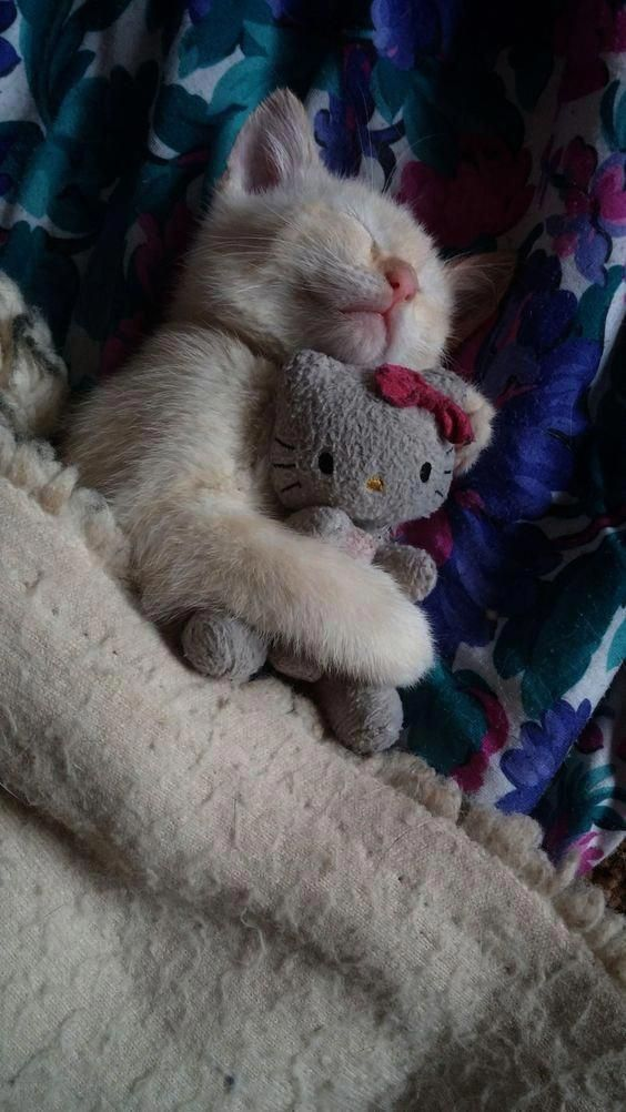 Sleep Tight My Precious Kitty Want More Cute Kittens Click The Photo For More Catloverscommunity Cats Ki Kittens Cutest Cute Cats Cute Cats And Kittens