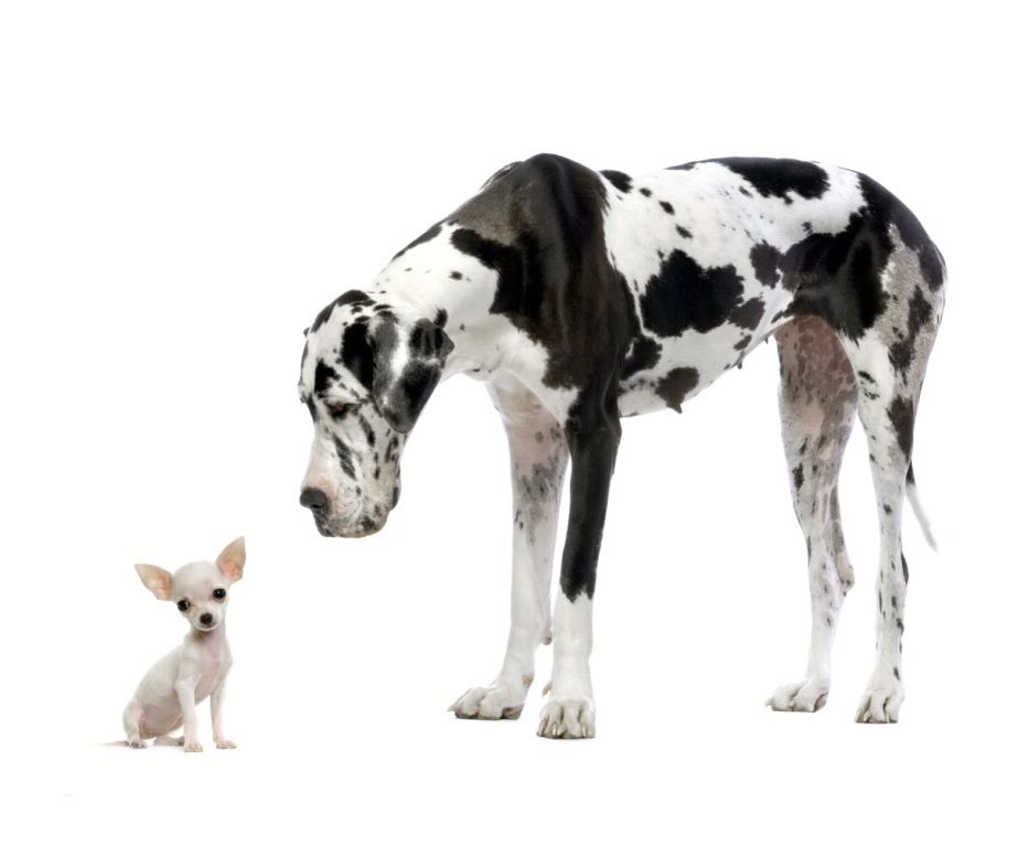 10 Ways To Spot An Unlikely Leader Pet Insurance For Dogs Great