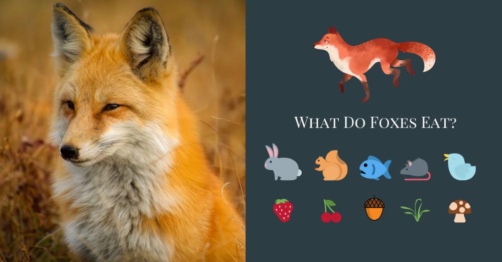 Crabeating Fox Wild dogs, Animals, Fox