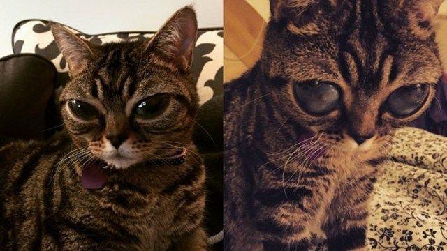 El caso de la gatita alienígena copó la web con su ternura de otro planeta - Telefe Noticias