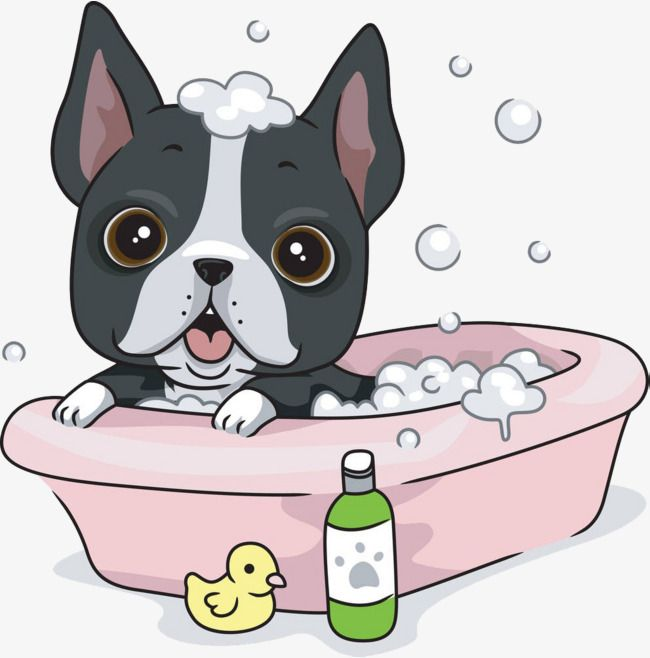 Dogs Take A Bath Dog Take A Bath Bathtub Png Transparent Clipart Image And Psd File For Free Download Puppy Cartoon Boston Terrier Funny Dog Bath