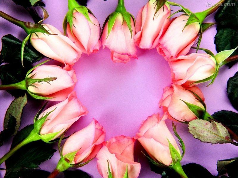 Coração De Rosas - Papéis de Parede de Flores, Coração De Rosas - iBaixa.com