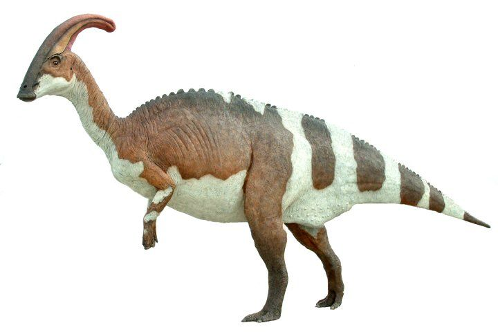 Parasaurolophus Or Meaning Near Crested Lizard In Reference To