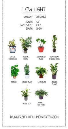 La Maison Boheme House Plants Heal  low light plants